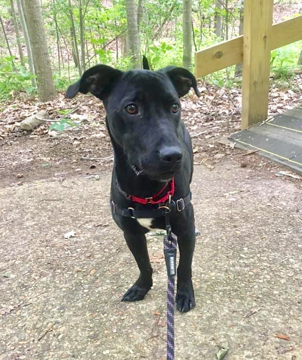 Roscoe, an adopted Mixed Breed in Fredericksburg, VA