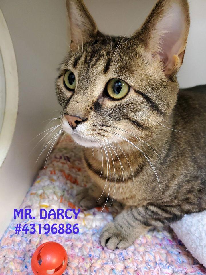 Mr. Darcy 1