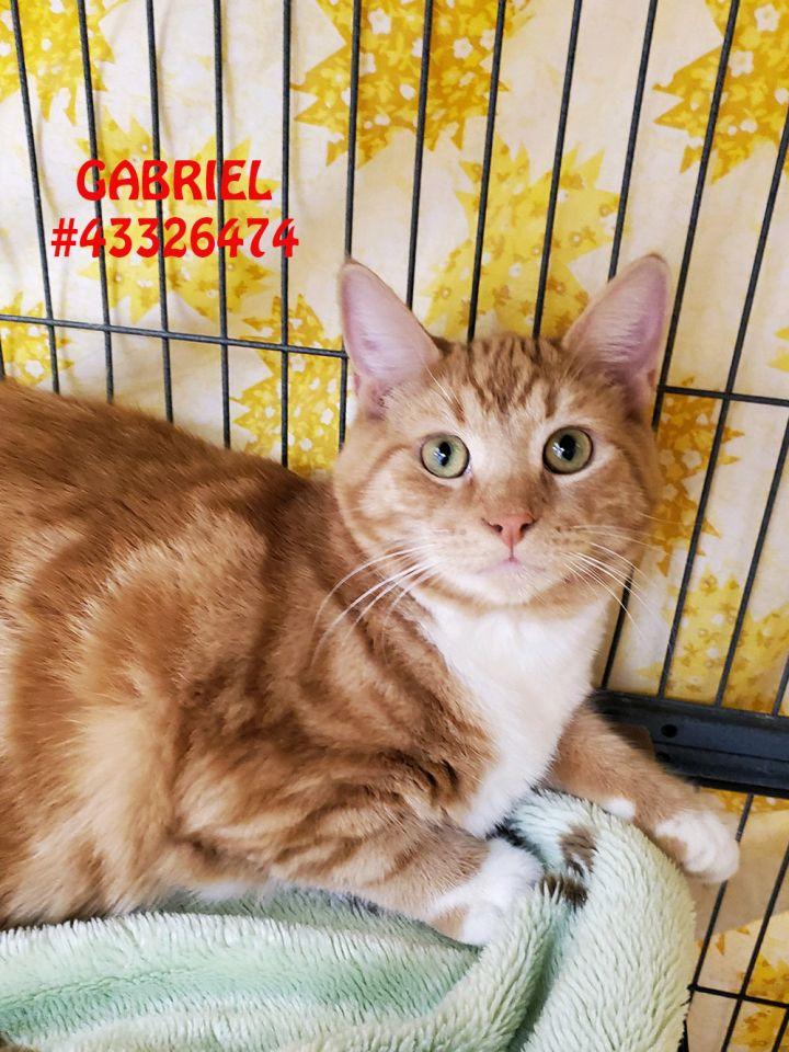 Gabriel 1