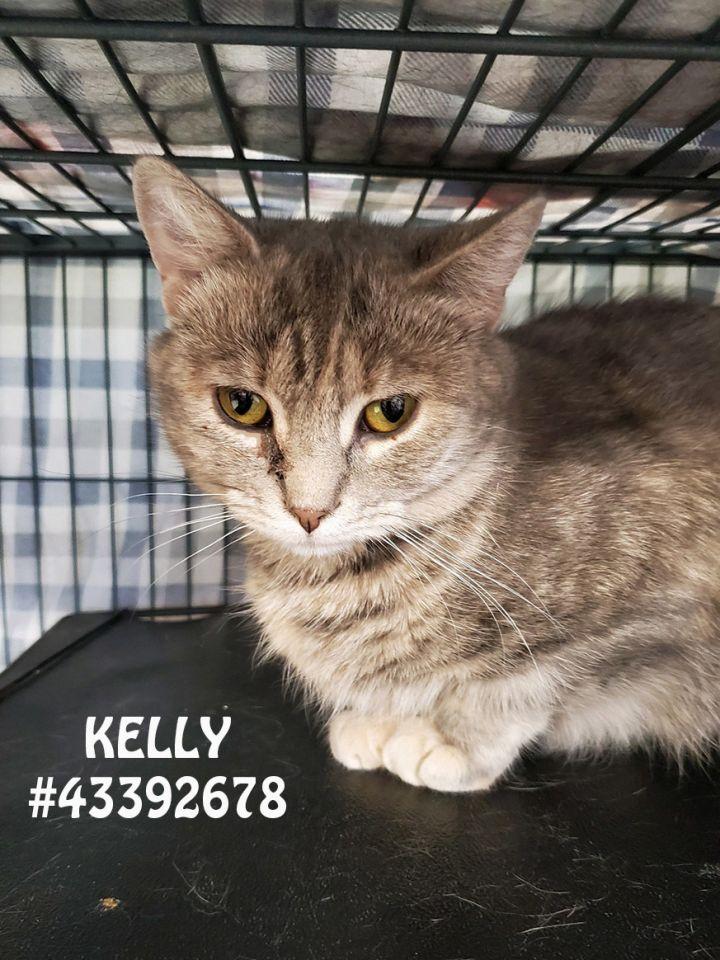Kelly 1