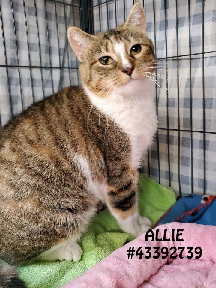 Allie 1