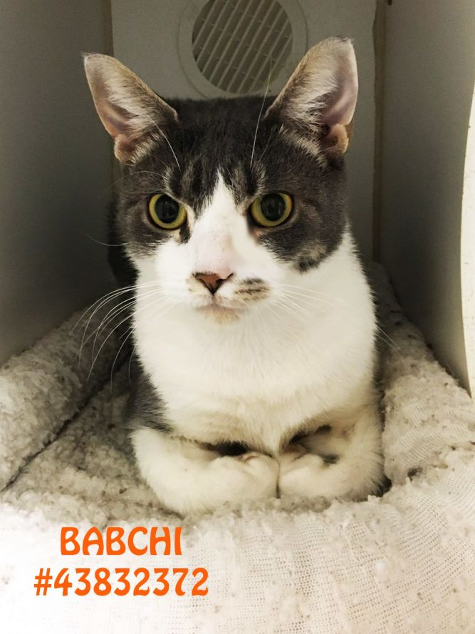 Babchi