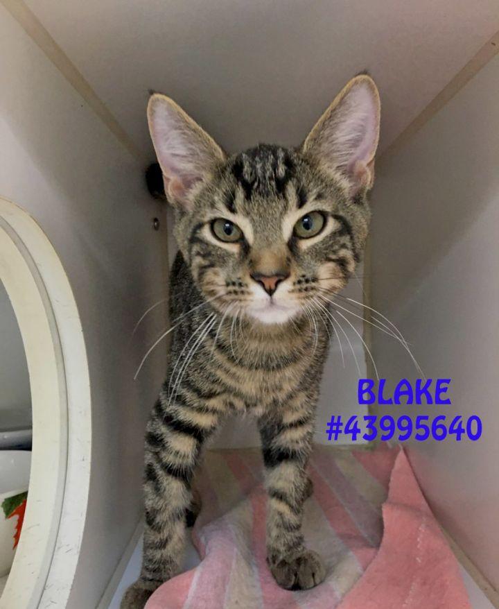 Blake 1