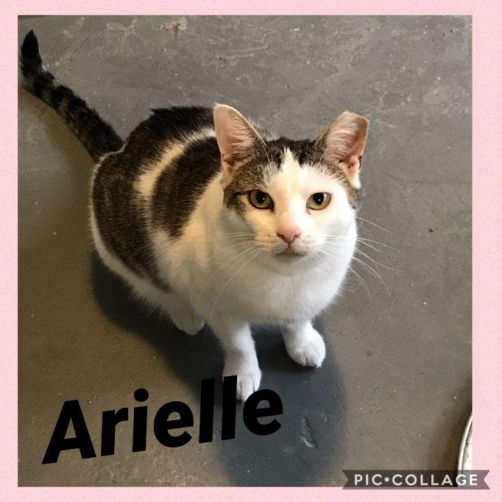 Arielle 1