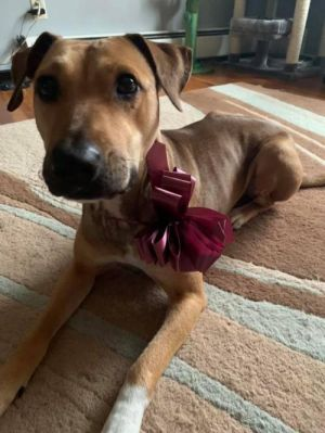 You can fill out an adoption application online on our official websiteMeet Thelma A female LabSh