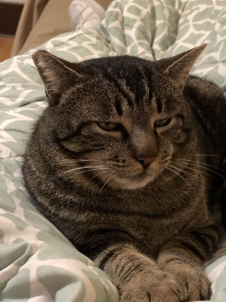 Uncle Street Cat 4