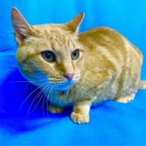 Hello my name is Lily I was owner surrendered due to my original owner having multiple strokes and