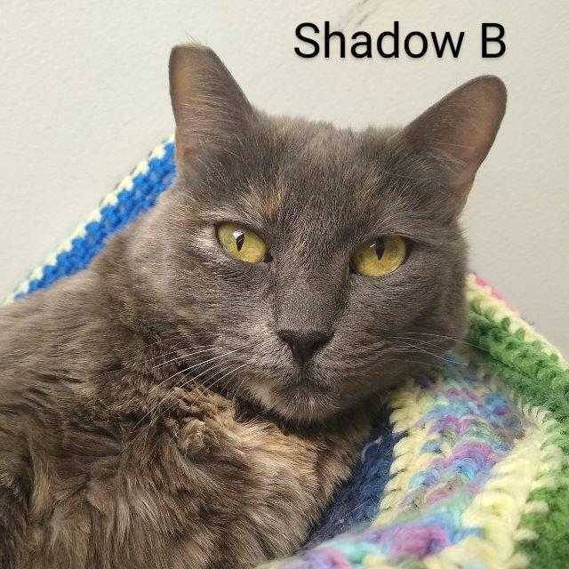 Shadow B 1