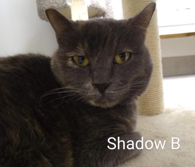 Shadow B 2