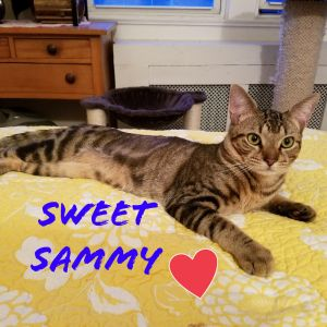 SAMMY is a true Sweetheart He absolutely LOVES to play and jump around the room with his beautiful
