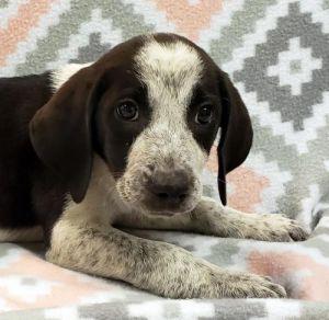 Meet Duncan Dudley Dunleigh Duska Dulari and Durina These adorable puppies