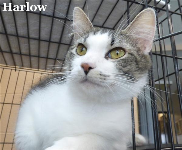 Harlow 2