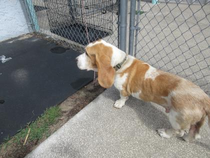 44230937 Available 5/3 Offsite Foster