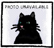 Romeo, an adoptable Domestic Short Hair Mix in Oak Ridge, TN