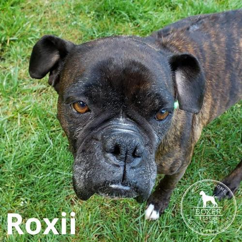 Roxii 1