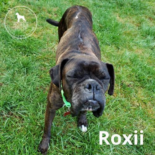 Roxii 2