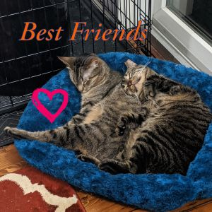 Cassidy and Sundance This sweet bonded duo snoozes with arms interlocked and love to run around th