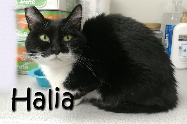 Halia 2