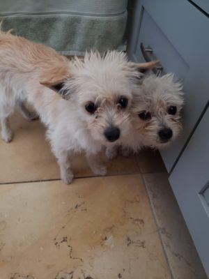 S-T-O-P BONDED PAIR TIA AND REMY PLEASE READ THE ENTIRE LISTING PLEASE DO