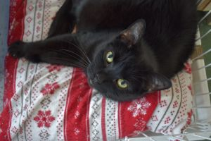 Beautiful Nella - she sadly is looking for a new home after her owner passed awa