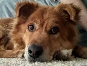 Rusty This sweet boy is 9 years old and is looking for a forever home Hes 45