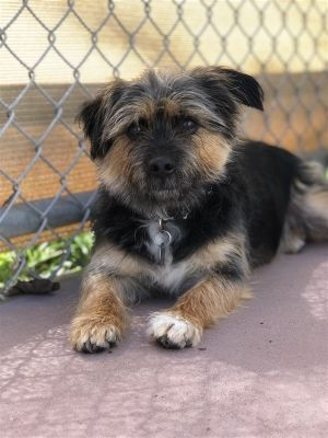 Hhhh-hi my name is Warcester Im one incredibly cute scruffy dog that is looking for a loving hom