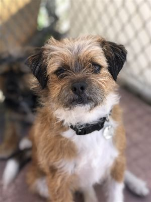 Hello there my name is Scottsdale Im one super cute guy that is looking for a very loving and pat