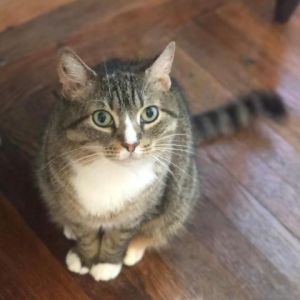 Meet Georgia-shes 5-years-old and searching for the perfect home This gal is a true southern peach
