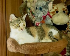 BEATRICE was rescued along with her kits at a waste management facility She was a fabulous mother t
