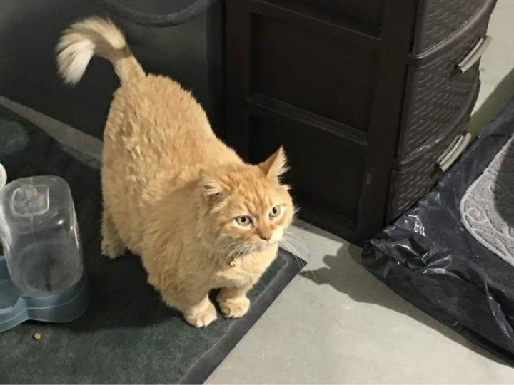 Catty 2
