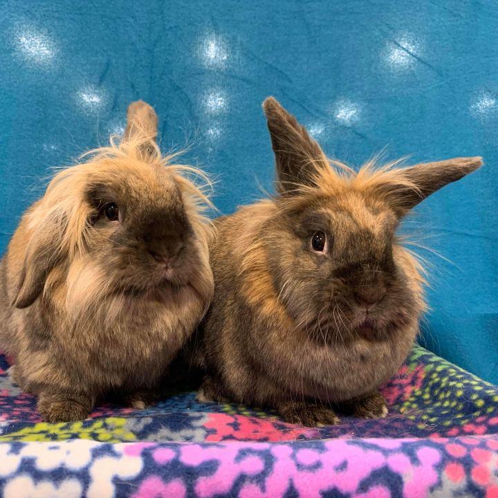 Clyde & Bonnie 1