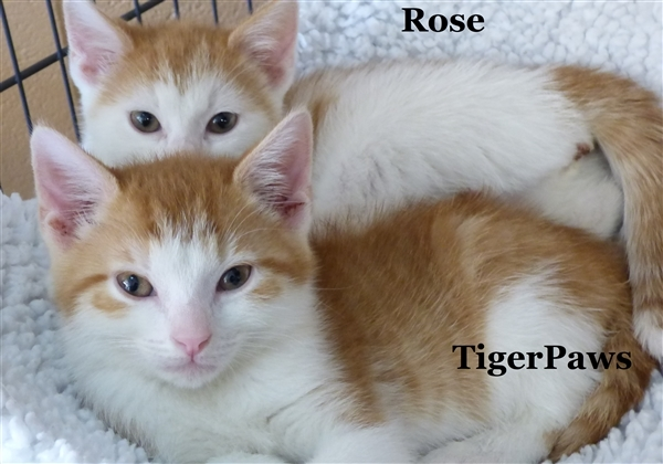 Tiger Paws 1