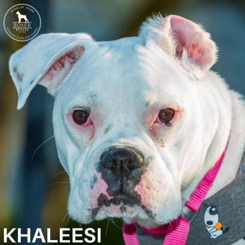Khaleesi 1