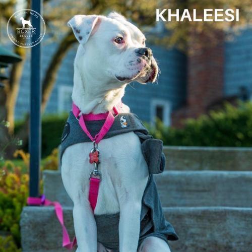 Khaleesi 3