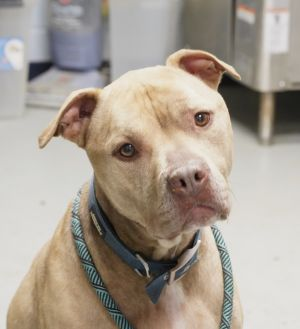 My Name is Rocco Im ready for a home  While I have been at the Yonkers Shelter quite som