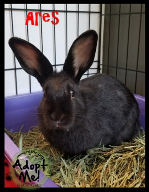 ARES This handsome neutered male is 2 years old He was adopted when he was very young Through no f