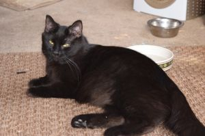 Meet AURA This 1-year-old girl is currently in a foster home but looking for he