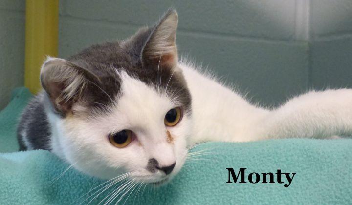 Monty 1
