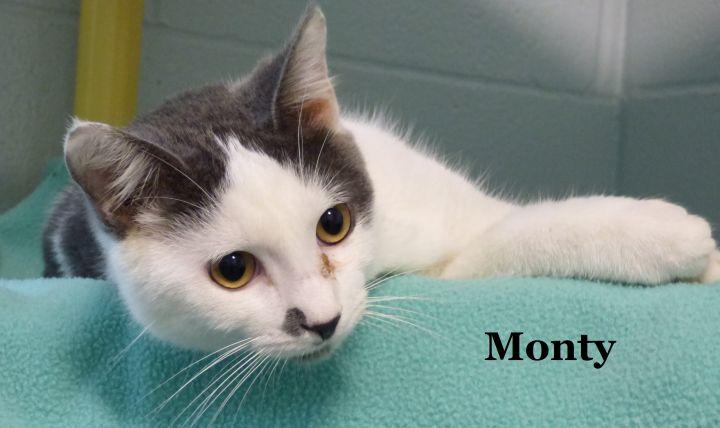 Monty 2
