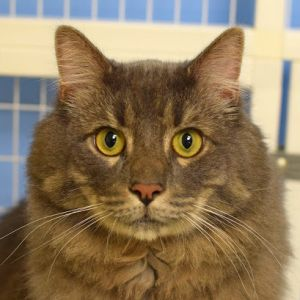 Grayson is a friendly and and very playful boy about 6 who came to us as a stray He loves