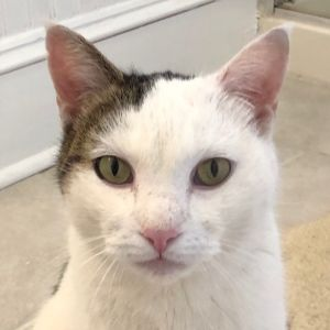 Malcolm is a friendly and outgoing boy about 3 who came to us as a stray He loves to be