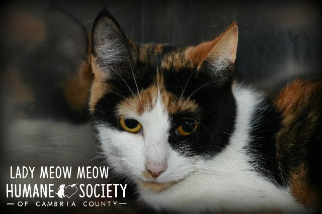 Lady Meow Meow 1