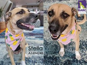 Ms Stella is very sweet and lovvves meeting new people She thinks meal times ar