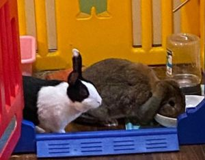 Cookie and Clover are a bonded duo in search of a forever family These two were