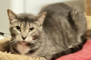 Cinderella is a very pretty and calm kitty She is ok with other cats Loves her