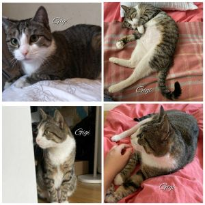 Gigi was found near a colony of community cats during a TNR TrapNeuterReturn Project in the Bron