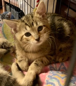 Ginger is a petite little girl with the face of an angel She is warming up to the good life