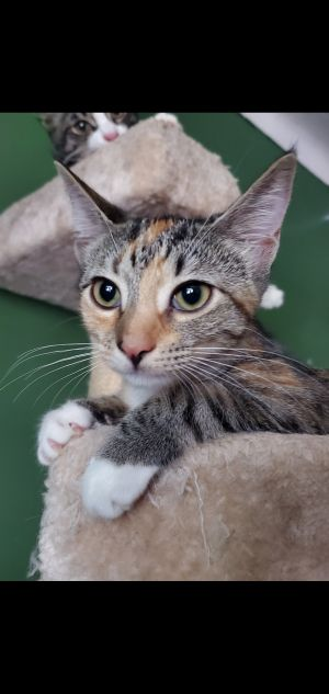 Im Punky a 4-month old spunky spirited little girl who has been bottled-raised by a hooman since