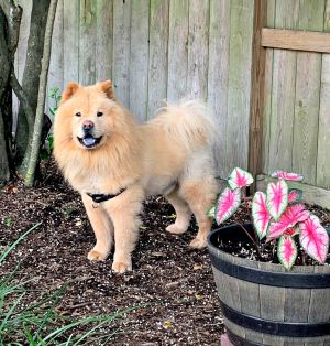 Hi Im Sammy Im 4 years old and a big strong boy approx 70 lbs I am completely house trained