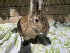 Ms. Zero Bunny Rabbit Rabbit
